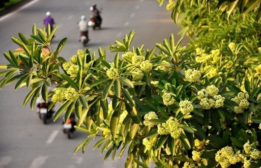 """Những loài hoa """"gọi"""" mùa thu về - 1"""