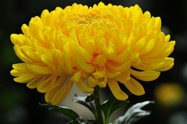 """Những loài hoa """"gọi"""" mùa thu về - 4"""