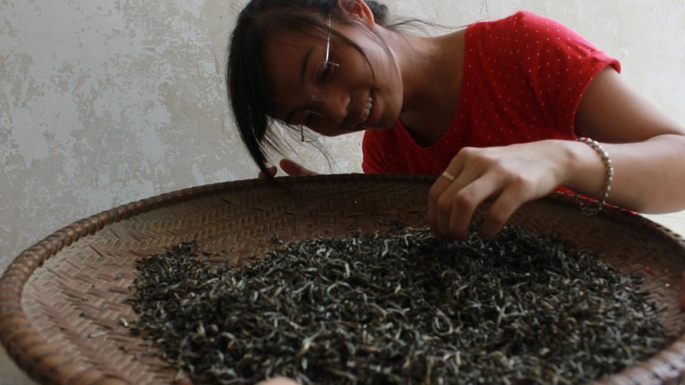 Dương Anh - cô gái bé nhỏ với ước mơ biến vùng trà Thái Nguyên thành vùng trà sạch 100%.