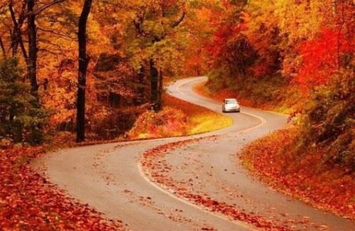 """Rộ trào lưu đi du lịch """"mùa lá đỏ"""" - 2"""