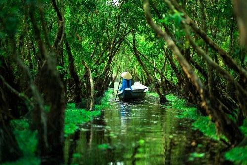 Rừng tràm Châu Đốc xanh mướt.