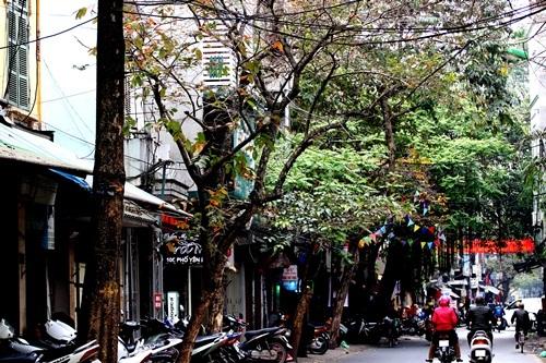 Mùa này, chỉ cần đi trên con phố Yên Phụ, Quận Tây Hồ, Hà Nội, người ta có thế bắt gặp những hàng cây rực rỡ những chồi non mơn mởn ở ngay đầu phố, nhưng ở cuối con phố ấy vẫn là những hàng khẳng khiu chưa kịp trút những chiếc lá vàng già nua....