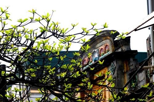 Hà Nội đẹp ngỡ ngàng trong tiết giao mùa tháng 3 - 12