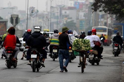 Những mẹt hoa bưởi này chủ yếu được người bán hàng mang từ quê ra, chứ ở Hà Nội không có mấy ai hái hoa bưởi đi bán, phần vì họ để đậu quả phần là muốn giữ hương cho từng nhà, từng ngõ.