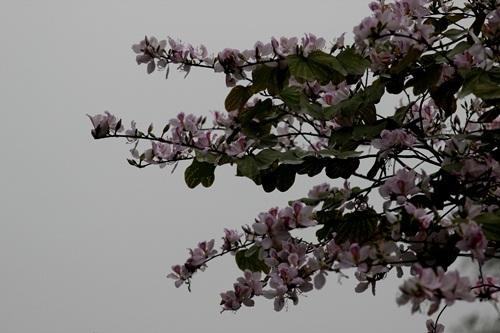 Những cành hoa vươn mình trong tiết tháng 3...