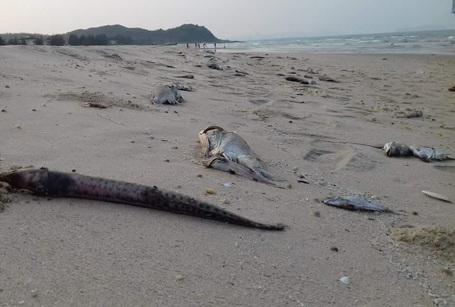 Nhiều doanh nghiệp lo ngại trước thông tin cá chết hàng loạt trên các bãi biển Miền trung chưa được cơ quan chức năng giải thích rõ ràng