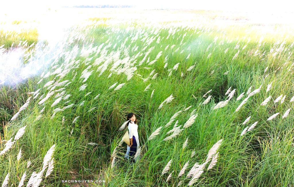 Chiêm ngưỡng cánh đồng cỏ lau trắng muốt bên dòng sông Lam - 9