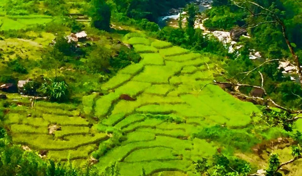 Sững sờ trước vẻ đẹp ruộng bậc thang ở miền Tây xứ Nghệ - 20
