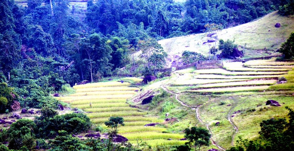 Sững sờ trước vẻ đẹp ruộng bậc thang ở miền Tây xứ Nghệ - 7