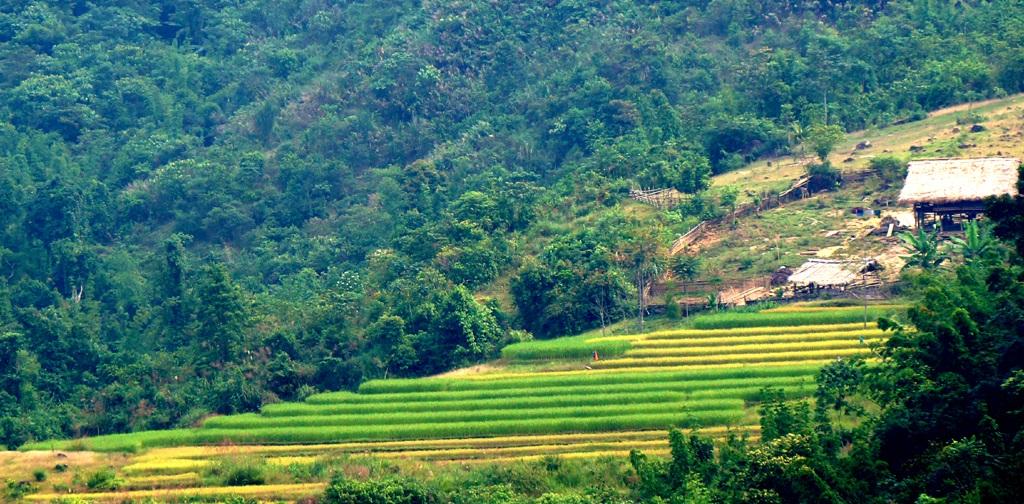 Sững sờ trước vẻ đẹp ruộng bậc thang ở miền Tây xứ Nghệ - 14