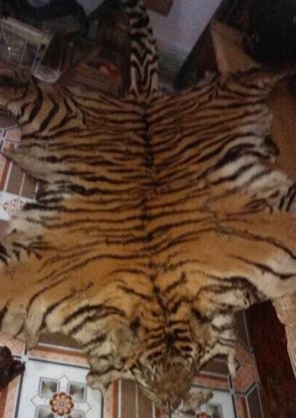Da hổ đã thuộc.
