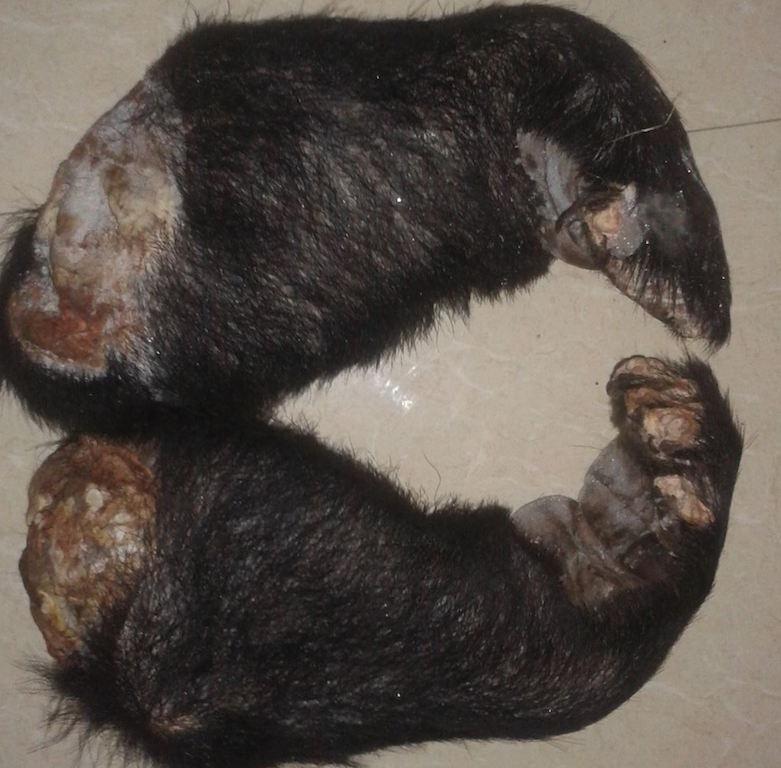 Ngang nhiên rao bán cao hổ, động vật quý hiếm trên Facebook - 11