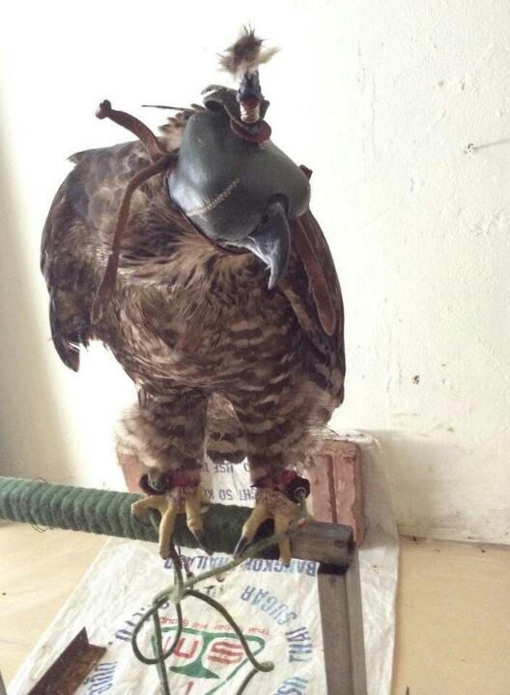 Chinh rao bán chim đại bàng.