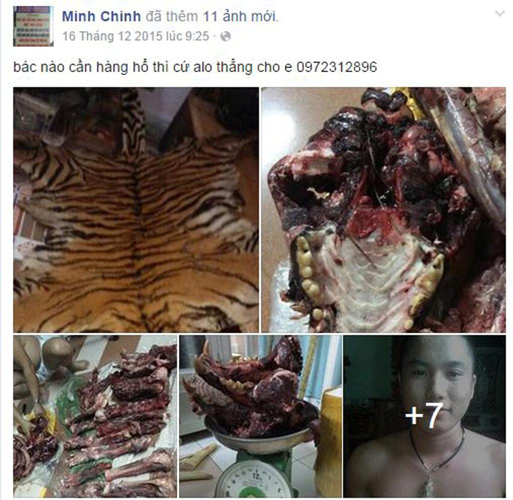Chinh thông báo khách hàng cần mua hổ thì gọi điện theo số riêng.