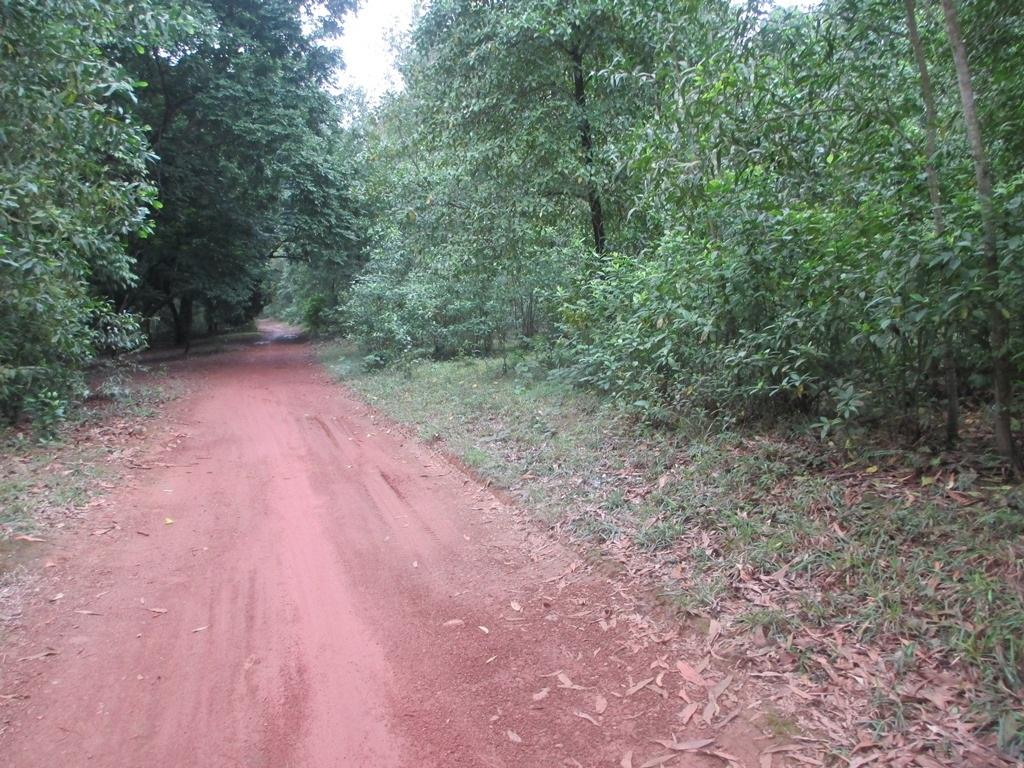 Con đường vào ngôi làng bị lãng quên.