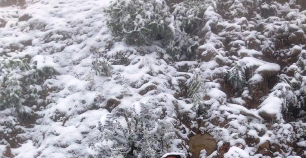 Nghệ An: Tuyết phủ dày hơn 30cm ở Buộc Mú - 7