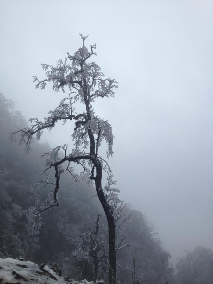 Nghệ An: Tuyết phủ dày hơn 30cm ở Buộc Mú - 4