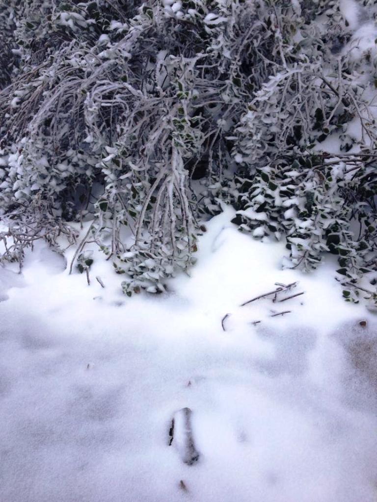 Nghệ An: Tuyết phủ dày hơn 30cm ở Buộc Mú - 13