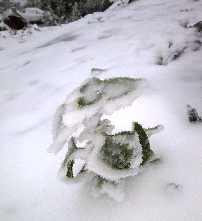 Nghệ An: Tuyết phủ dày hơn 30cm ở Buộc Mú - 19