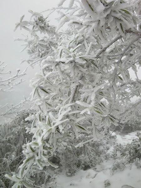 Nghệ An: Tuyết phủ dày hơn 30cm ở Buộc Mú - 15