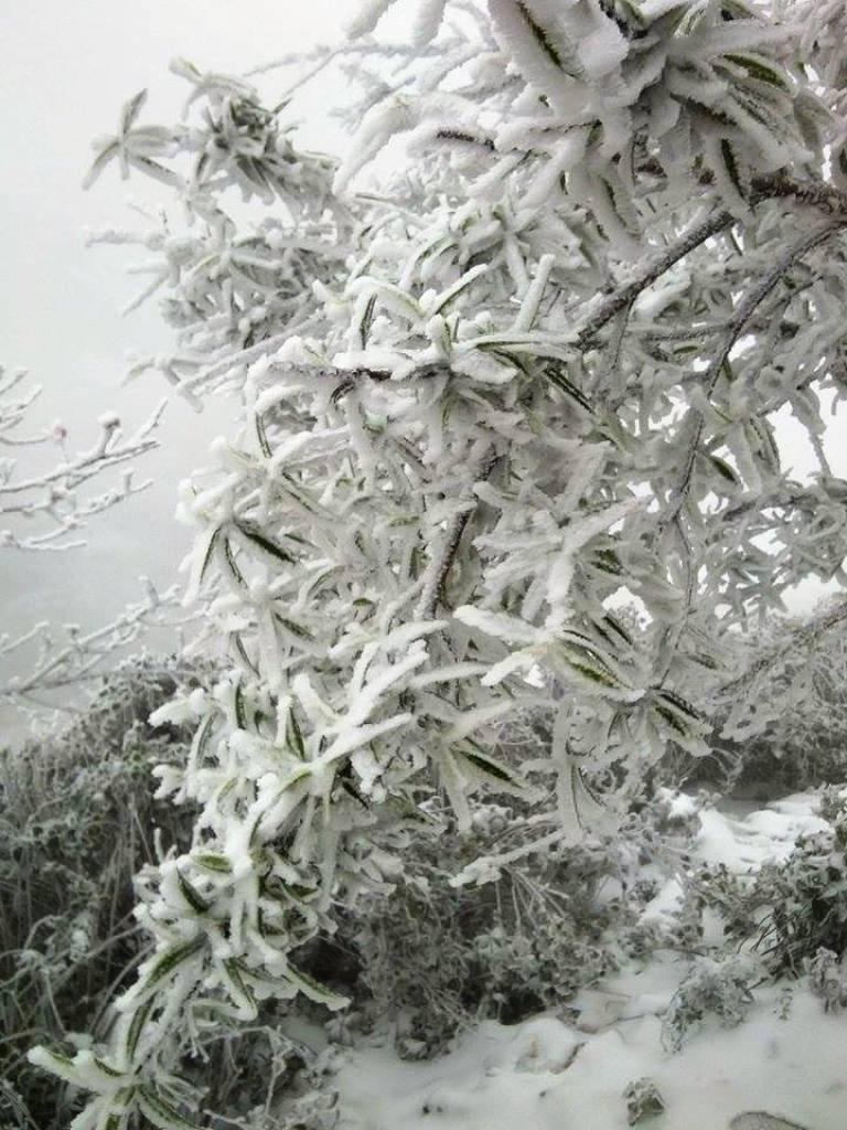 Nghệ An: Tuyết phủ dày hơn 30cm ở Buộc Mú - 18