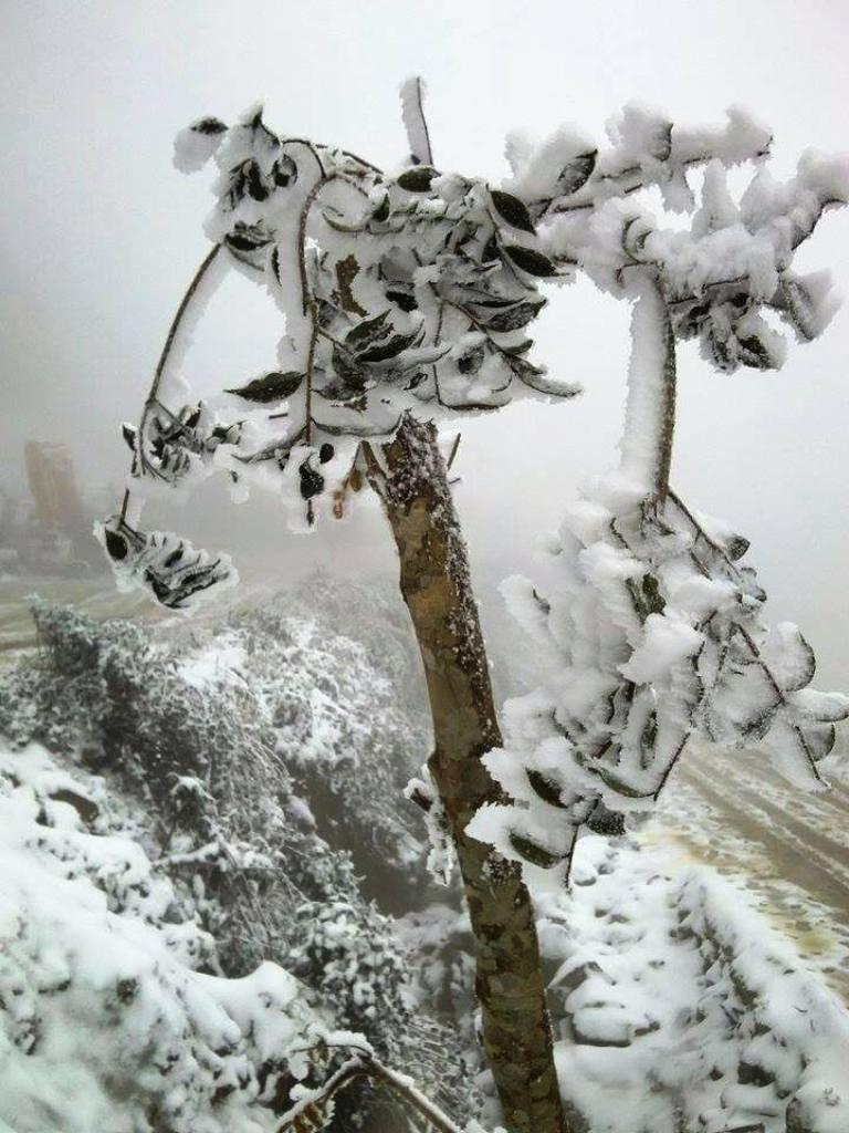 Nghệ An: Tuyết phủ dày hơn 30cm ở Buộc Mú - 17