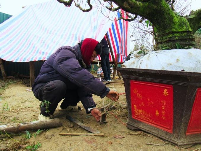 Chủ cửa hàng hoa đào đang dựng lều để làm nơi nghỉ ngơi vì những ngày này sẽ phải làm việc cả ngày lẫn đêm, phục vụ nhu cầu chơi hoa Tết của khách hàng.