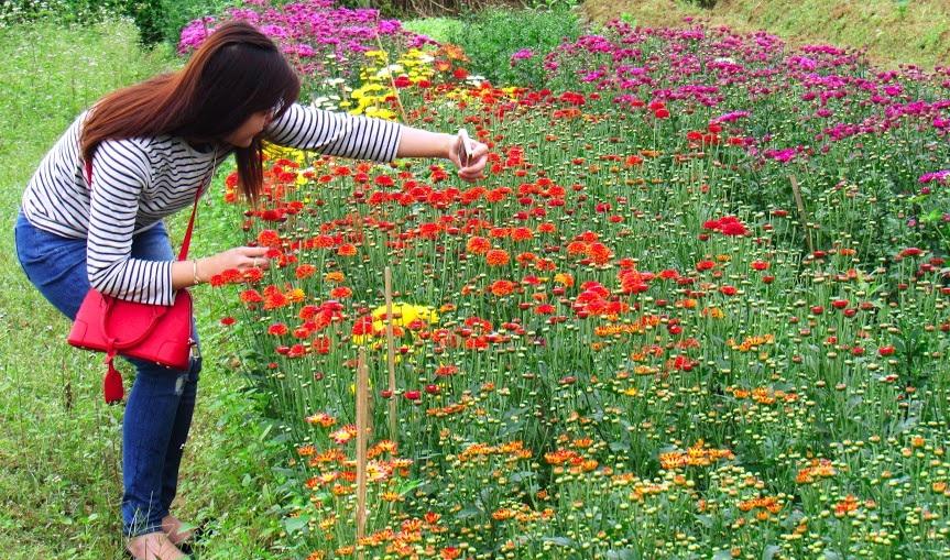 Một số bạn trẻ tìm về làng hoa Nghi Liên (TP.Vinh) để chụp ảnh lưu giữ những khoảnh khắc trên cánh đồng hoa đầy sắc màu.