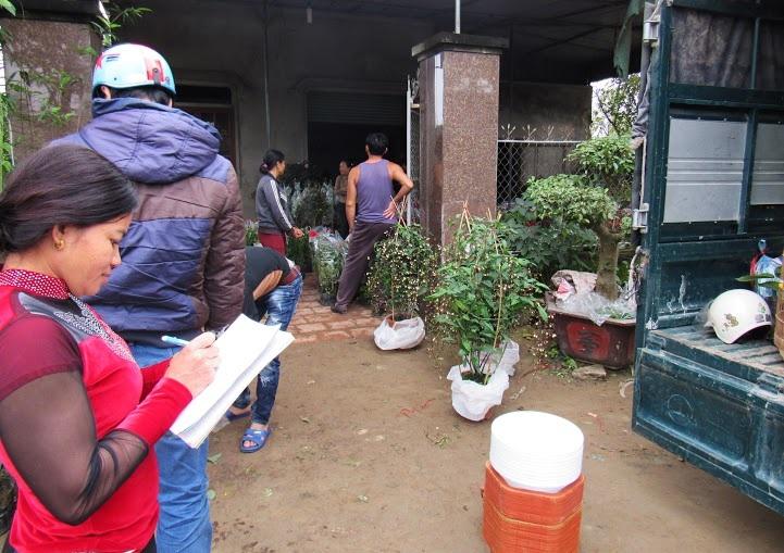 Nhiều thương lái đã tất bật đến nhà các hộ dân ở xóm Kim Chi, Nghi Ân để mua hoa với giá rẻ hơn và sau đó bán ra thị trường.