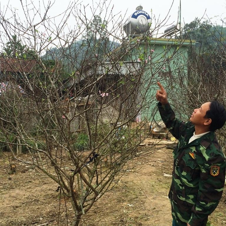 Từ ngoài rằm tháng Chạp, nhiều người đã đến các vườn đào của người dân ở xã Kim Thành để đặt hàng bán tết.