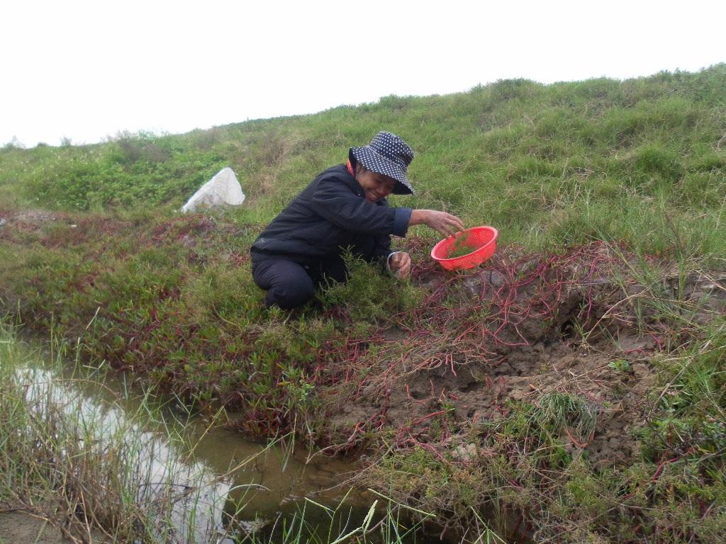 Phụ nữ vùng ven biển Quỳnh tranh thủ những lúc nông nhàn lại cất công đi tìm rau.