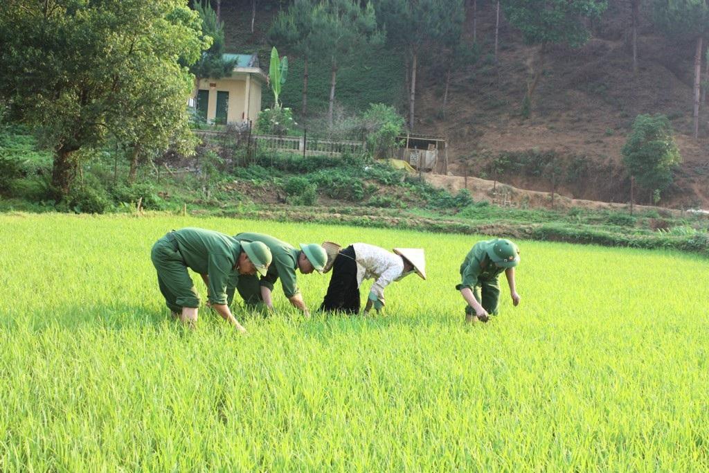 CBCS BĐBP Nghệ An giúp đồng bào địa phương lao động sản xuất.