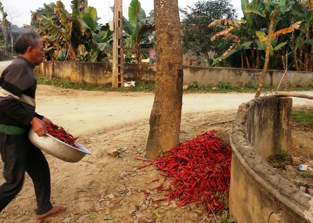 Một hộ dân không còn quan trọng với sản phẩm mình trồng ra nên đành vứt bỏ như thế này. (Ảnh: Thanh Đức)
