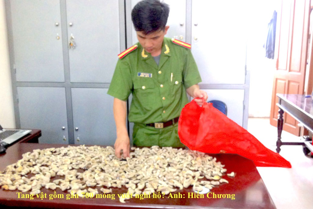 Bắt vụ tàng trữ gần 700 móng vuốt hổ? - 1