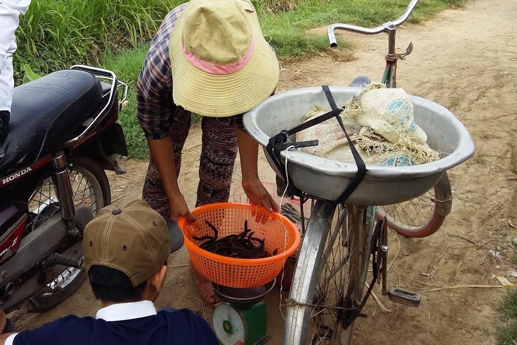 Mỗi ngày các em đi đánh trúm cũng chỉ được 4-5 lạng (0,5kg). Và được bán cho một người thu mua trong vùng.