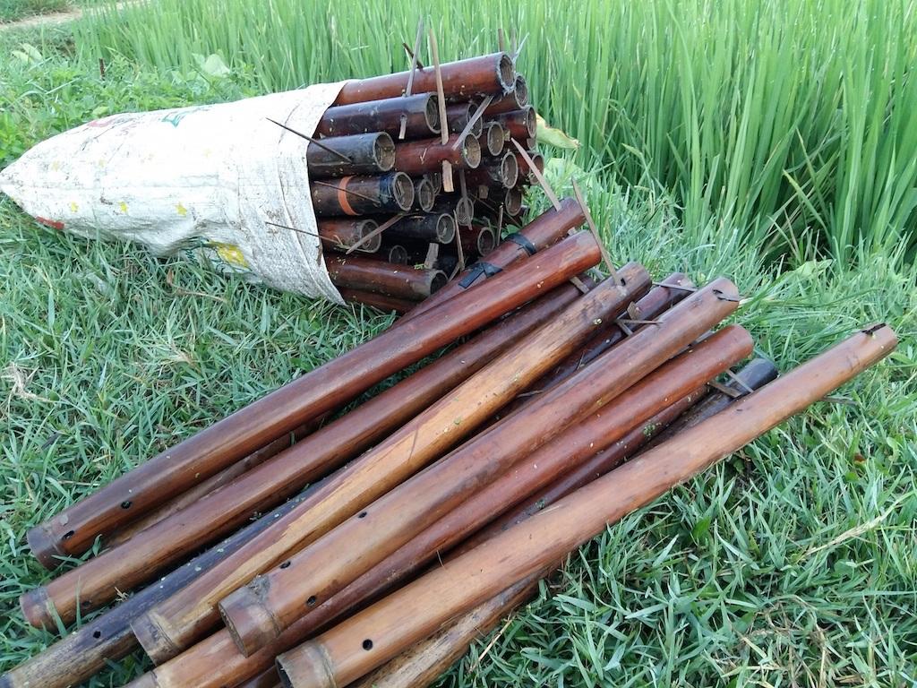 Ống trúm được vớt lên sau một đêm đặt dưới ruộng lúa.