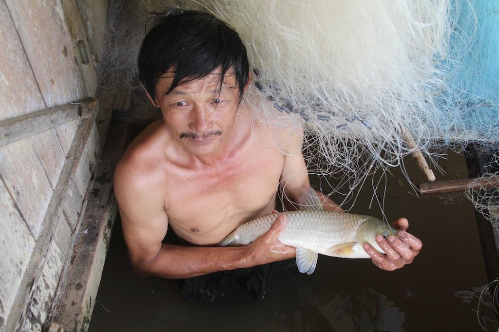 Buốt ruột vì cá chết.