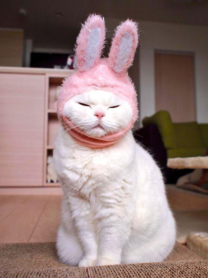 Mèo già lười biếng khiến fan mê mẩn - 4