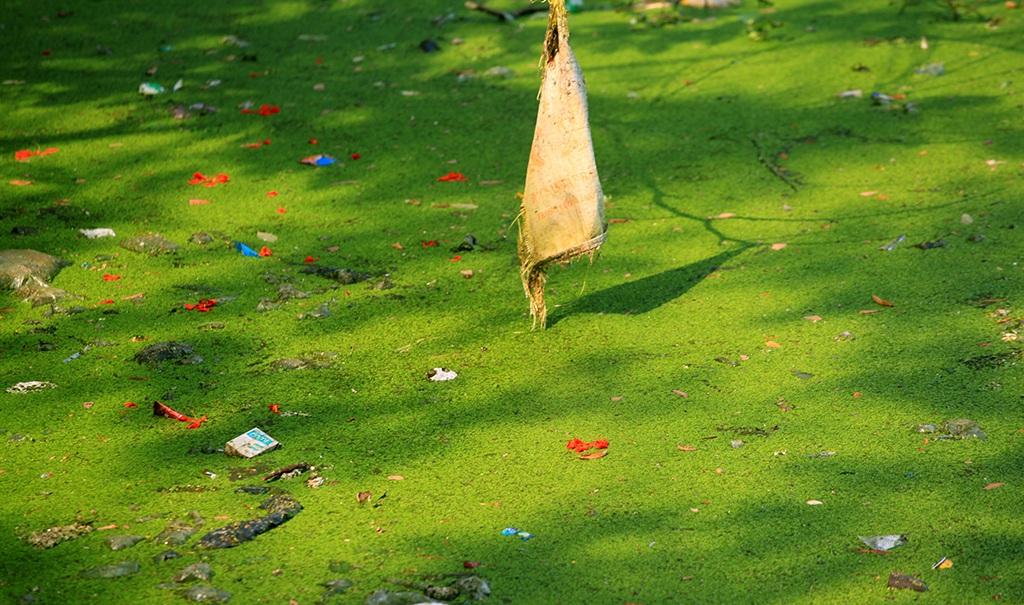 Những ngày nắng nóng, mùi bốc lên từ hồ Văn Chương khiến nhiều ngừời dân khó chịu.