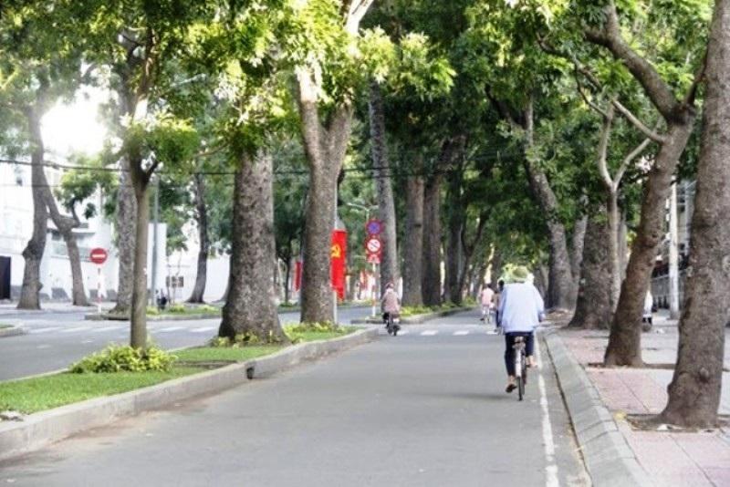 Thực hiện việc di dời cây cổ thụ trên đường Tôn Đức Thắng sẽ ảnh hưởng lớn đến đời sống người dân