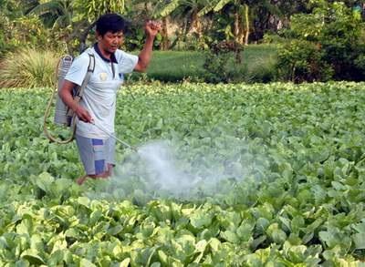 Rau có dư lượng hoạt chất thuốc bảo vệ thực vật vượt mức giới hạn cho phép trở thành nỗi ám ảnh của nhiều người tiêu dùng.