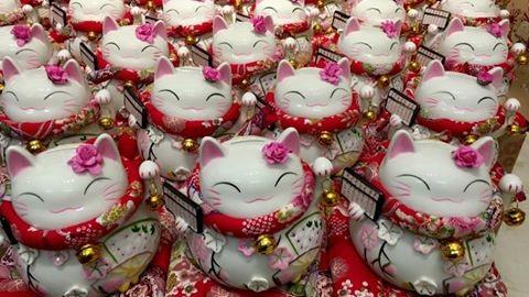 Mèo Thần Tài được rao bán trên mạng xã hội.