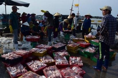 Vasep khẳng định chất lượng các mặt hàng hải sản xuất khẩu không bị ảnh hưởng bởi hiện tượng cá chết ở ven biển 4 tỉnh miền Trung trong thời gian qua.