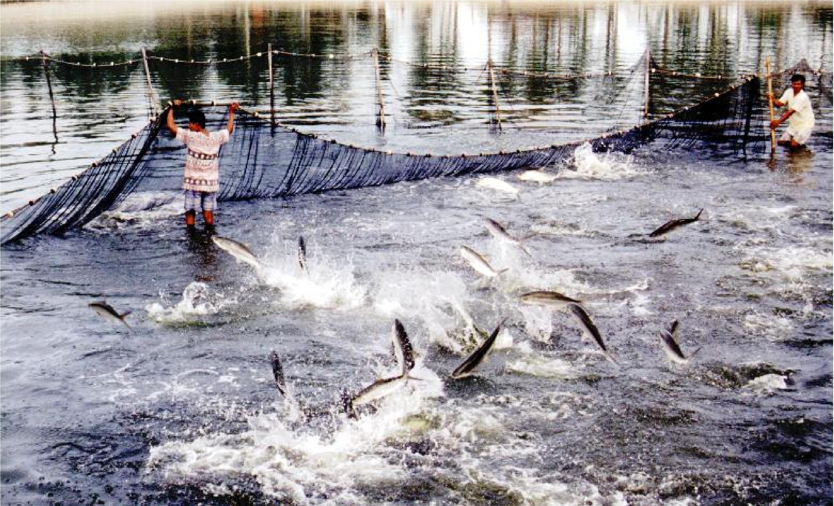 Tổng cục Thủy sản: Làm giả công văn, cấp chứng nhận trái phép hơn 800 sản phẩm - 1