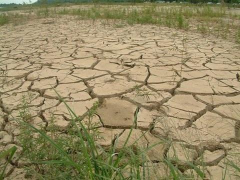Đẩy mạnh chuyển đổi đất lúa kém hiệu quả, đất khô hạn sang trồng cây khác (Ảnh minh họa)