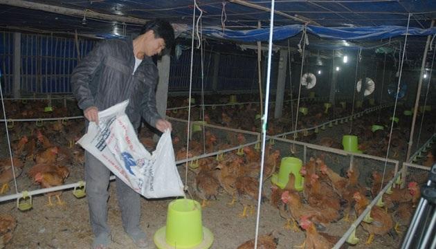 Nông dân HTX chăn nuôi Quý Hiền (Lào Cai) phấn khởi tăng gia sản xuất (Ảnh: ND)