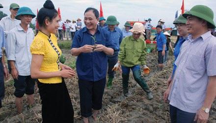 Bí thư Tỉnh uỷ Yên Bái Phạm Duy Cường (người cầm cây ngô non) xuống ruộng cùng bà con nông dân. (Ảnh: Tùng Duy).