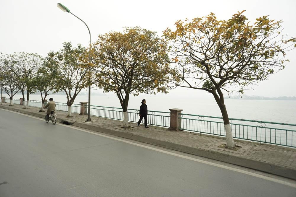 Hà Nội những ngày này đang là thời điểm cây lộc vừng thay lá. Những hàng cây ngả sang màu vàng mật ong như làm ấm lại bầu không khí lạnh ẩm trên đường phố thủ đô (Ảnh: Hữu Nghị)