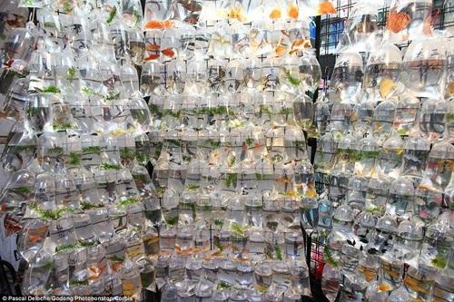 Chợ bán cá cảnh sầm uất nhất Hong Kong.