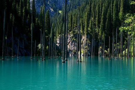 Những thân cây linh sam sinh trưởng dưới lòng hồ nhô lên như những ngọn giáo